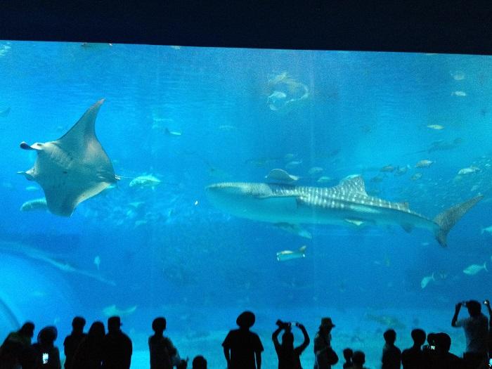 美ら海水族館黒潮の海