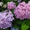 沖縄の6月は気温や服装、梅雨はどう?海にも入れる?
