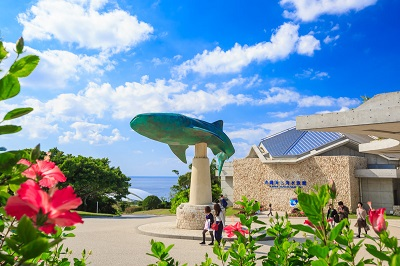 美ら海水族館6