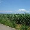 八重山離島巡り(西表・波照間・小浜)旅行記⑥ レンタバイクで小浜島観光