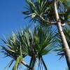 11月の沖縄旅行 気温や服装、海で泳げる?