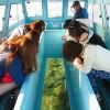 泳げなくても大丈夫!海水浴以外で沖縄の海を楽しめるプランは?